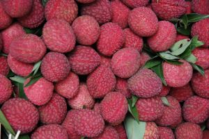 Lychee Fruit: Tropical Delight