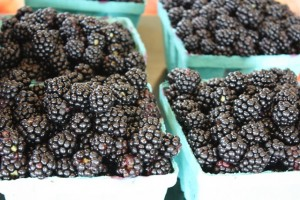 Pick Your Own Fruit at the Abbott Farms in New York