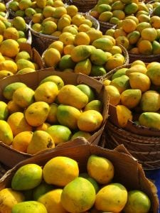 Mangos May Prevent Colon and Breast Cancer
