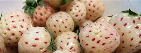 What Are Pineberries?