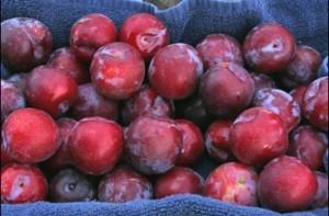 Fruit Origins in North America