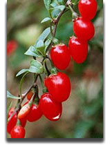 Health Benefits of Wolfberry