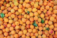 Apricots by Sudip Guharoy