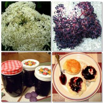 Mosaic of Elderberries to Jelly by Jim Baker